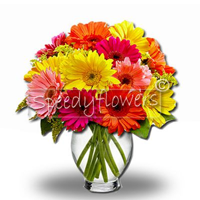 Are you undecided about which flowers to send? This Gerbera bouquet takes away any doubt.