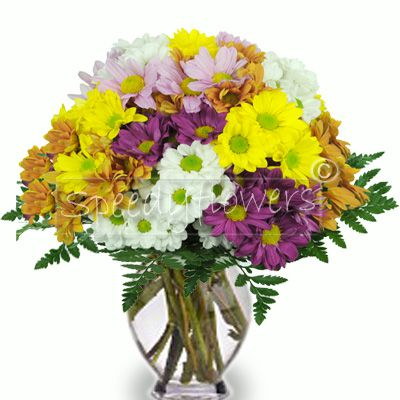 Bouquet of colorful daisies