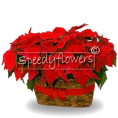 Poinsettia basket gift arrangement to forward your wishes.