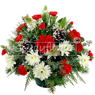 Christmas composition with red and white flowers