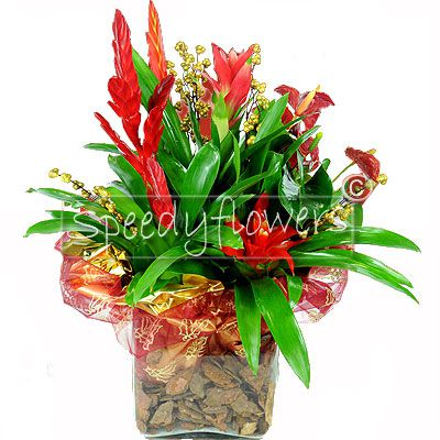 Forwarding a plant in glass arrangement for Christmas
