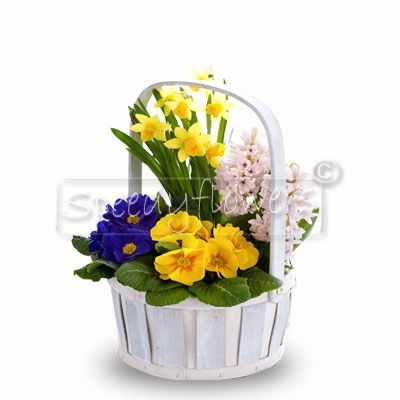 Arrangement of spring flowering plants for Mother's Day