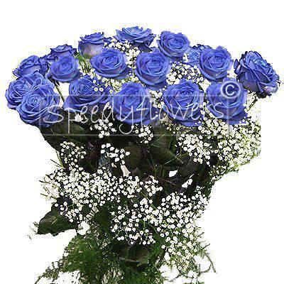 Twelve long stem blue roses