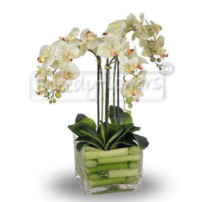 Composizione in vaso di orchidee phalaenopsis for Vaso orchidea