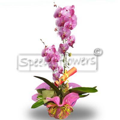 Inviare spedire orchidee orchidea regalo for Orchidea foglie gialle