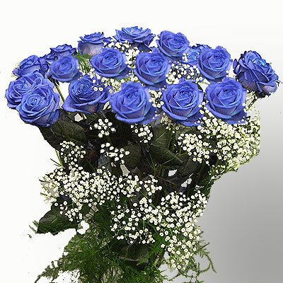 Forty-eight blue Roses