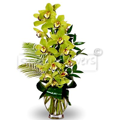 Branch of orchid cymbidium