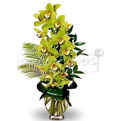 Acquistare online ramo di orchidea cymbidium - Orchidea da esterno cymbidium ...