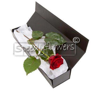 Una rosa rossa singola per san valentino