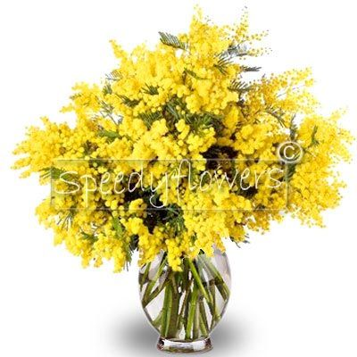 Giving a branch of mimosa on the Women�s Day.