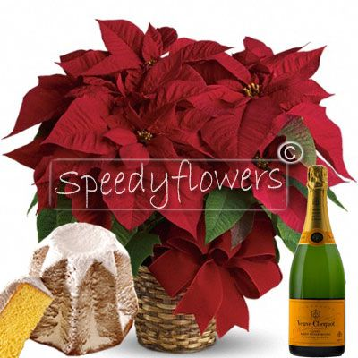 Package Gift poinsettia sparkling wine and Pandoro