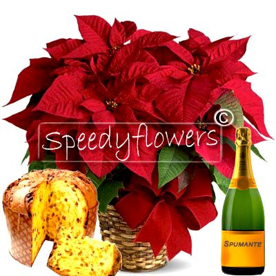 Beautiful box christmas poinsettia complemented by sparkling wine and panettone