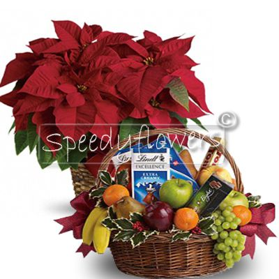 Beautiful poinsettia plant accompanied by a basket of fruit