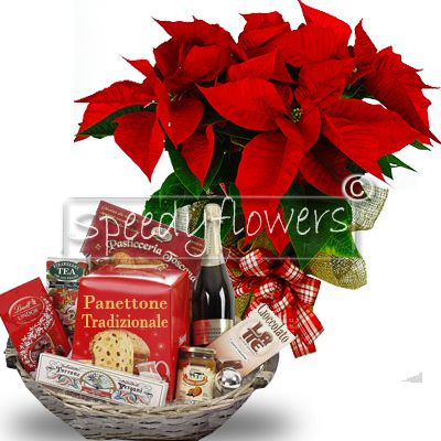 Buy now you our offer poinsettia more basket Italy