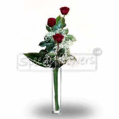 Three red roses for Valentine's Day
