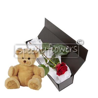 Una rosa rossa e orsetto per san valentino
