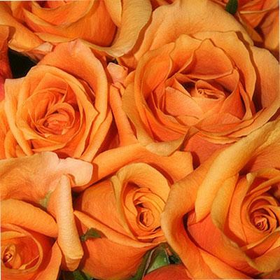 Eleven orange Roses