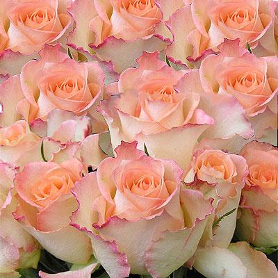 Eleven pink Roses