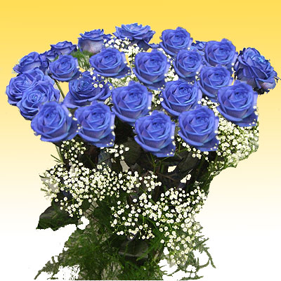 Twenty-four blue roses